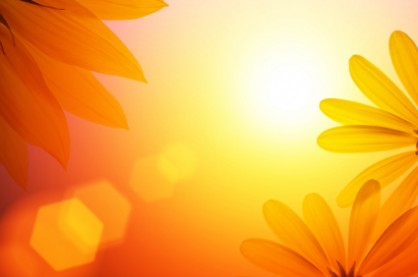 sunshine and sunflower