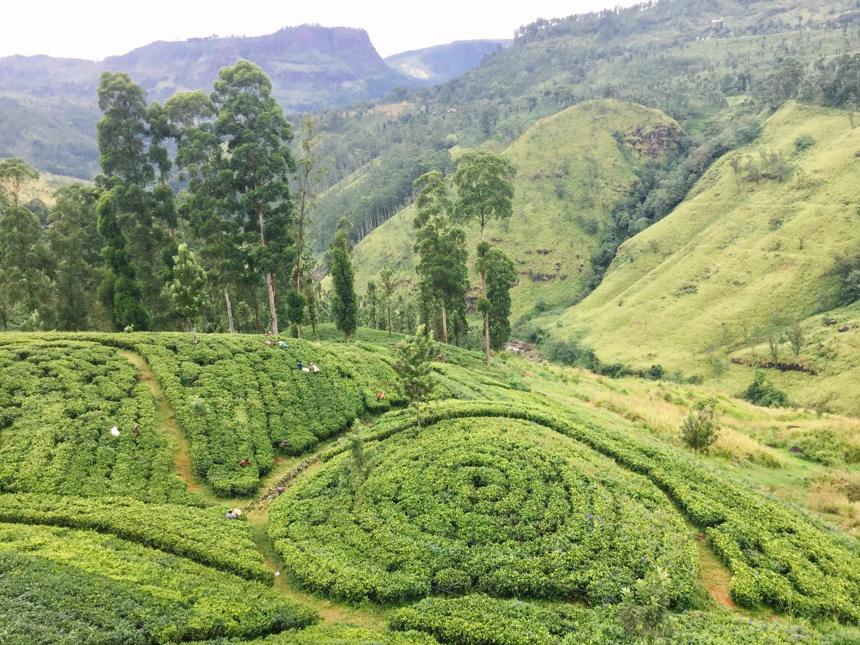 Your Bestow Tea Break is Changing A Community in Sri Lanka
